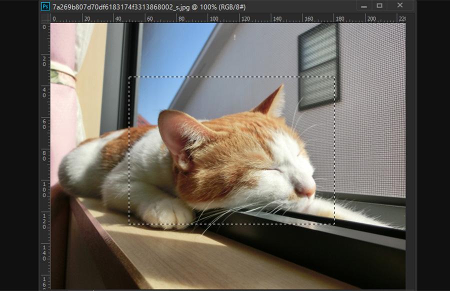Photoshop フォトショップ 画像の拡大・縮小 ドラッグする方法