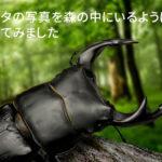 クワガタの写真を森の中にいるように合成してみました