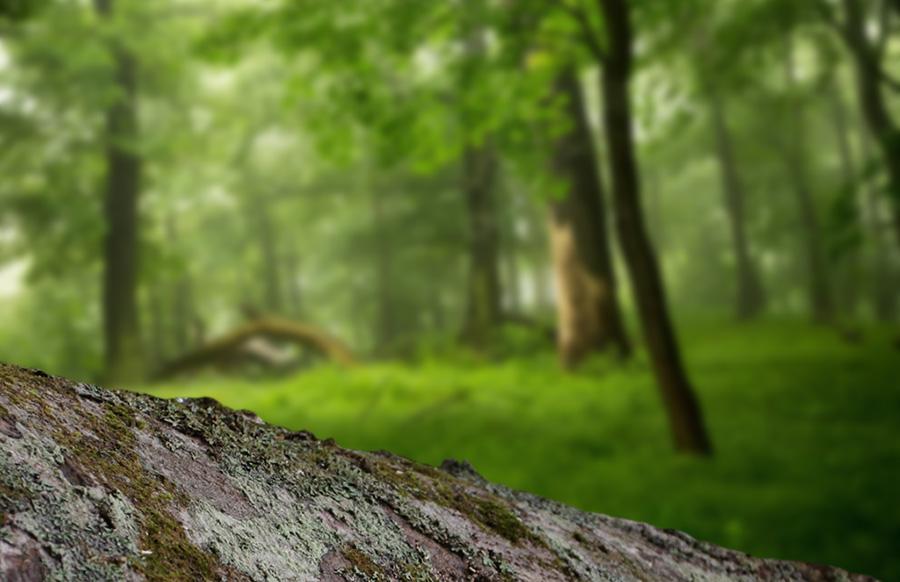 背後の森林をぼかす
