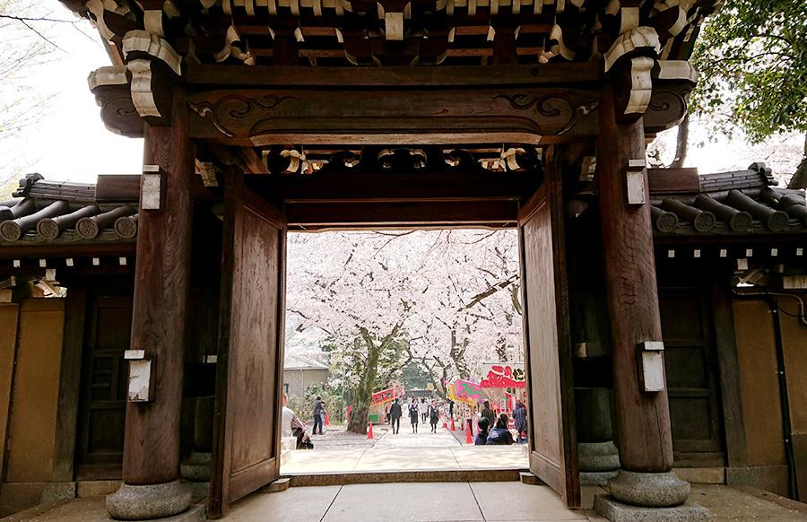 法明寺 境内 桜